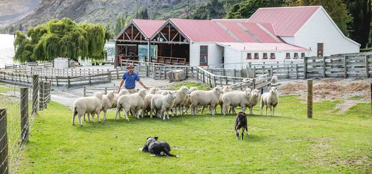 Работа в Новой Зеландии для иммигрантов
