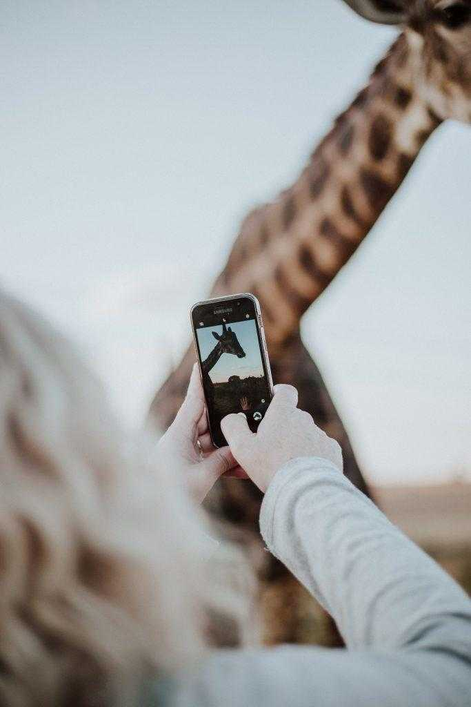 Жираф в Африке