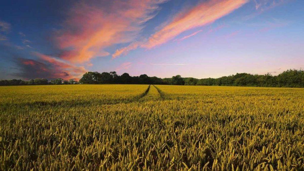 Сельское хозяйство Польши